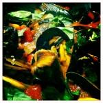 Moroccan mussel recipe